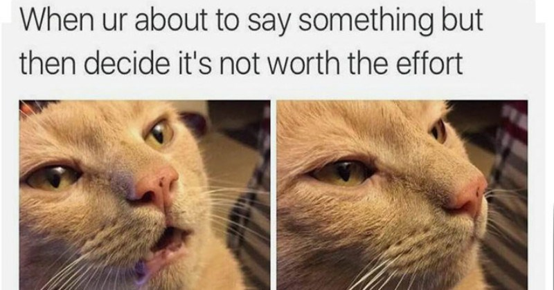 Memes Caturday Cats - 4562693