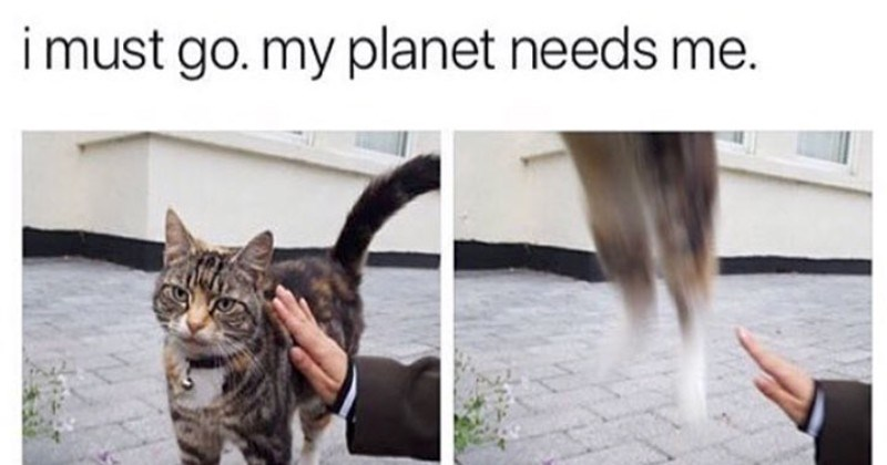Memes animals - 4596741