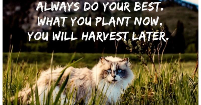 quotes motivation Cats - 4842245