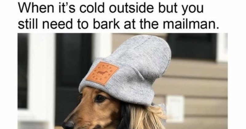 dogs mailman Memes - 4851973