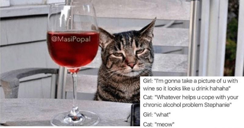 Guy Hilariously Captions Funny Animal Photos