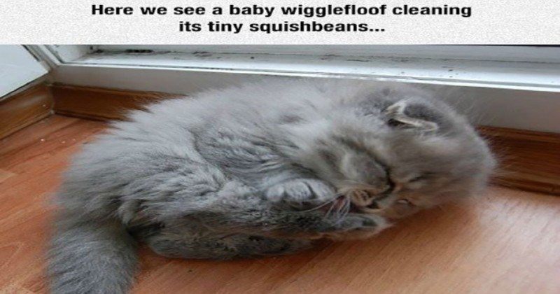 imgur kitten cute funny - 5337605