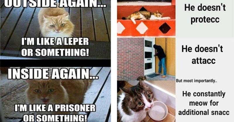 funny memes Memes Caturday Cats funny cat memes - 5374213