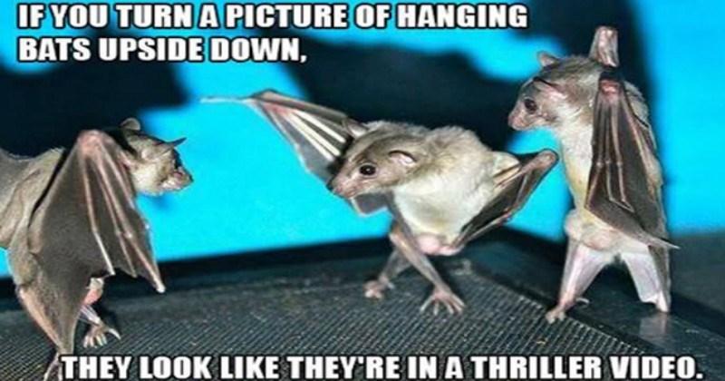 dogs bat memes bats cute Memes batman memes batman Cats funny - 5638149