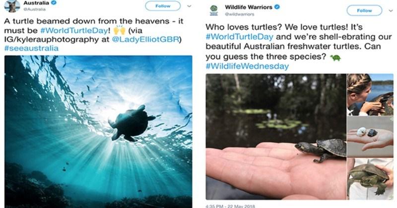 fun world turtle day turtles global warming ocean cute plastic cute turtles funny - 5718277