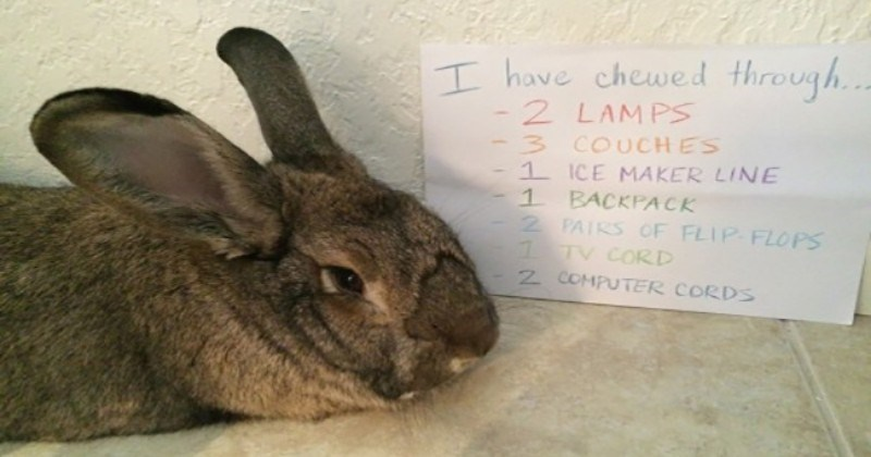bunnies cute bunnies cute facebook dog shaming bunny shaming funny rabbits - 5719045