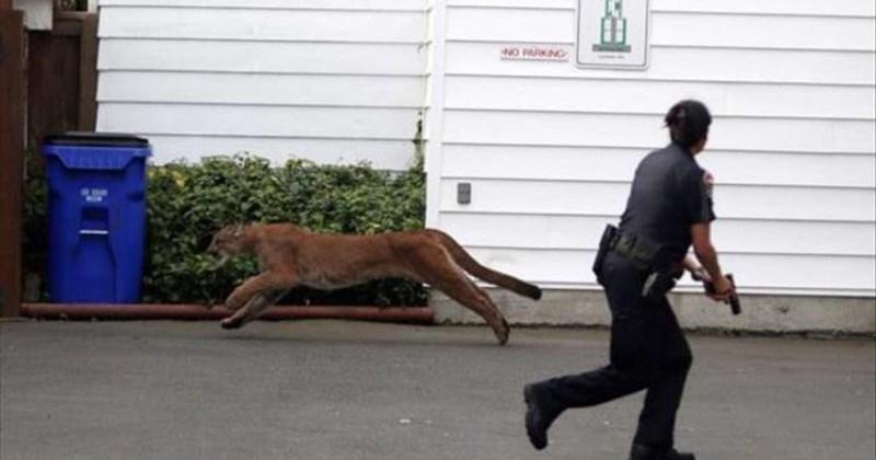 dogs wtf animal photos photos Cats weird - 5721093