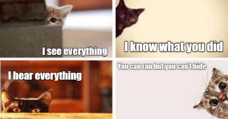 funny kittens lolcats edition funny memes kitten Memes funny cats Cats funny cat memes - 5735429