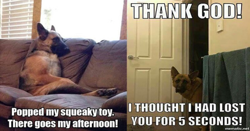 25 Goofy Memes Of German Shepherds That Will Make You Laugh All Day