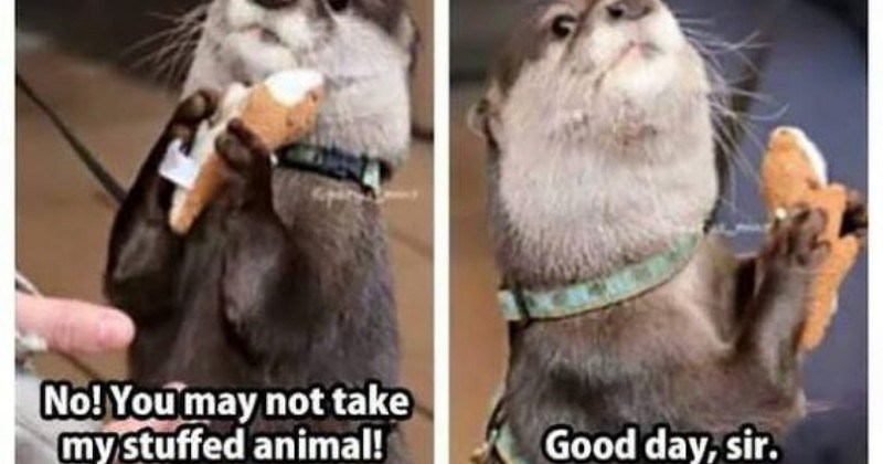 These Memes Tweets Prove Otters Are The Cutest Creature Ever I