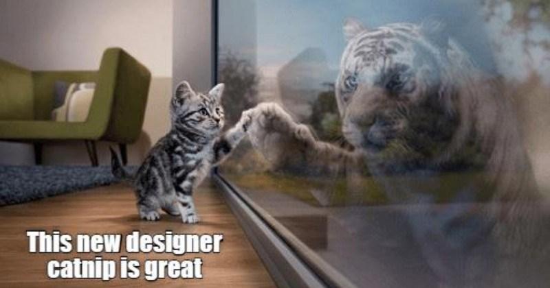 funny memes Memes Cats cat memes - 6254341