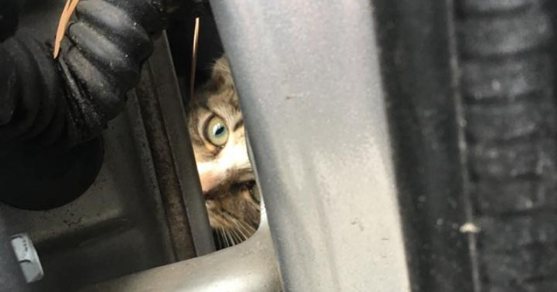 car fender hero car stuck auto tech Cats rescue - 6306565