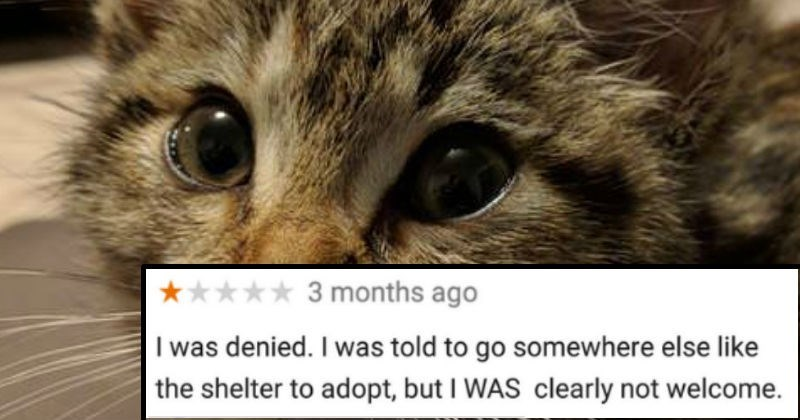 reviews discrimination adoption pets yelp Cats business - 6409477