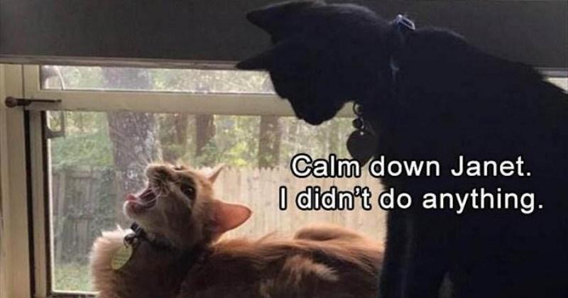funny memes Memes Cats cat memes - 6778885