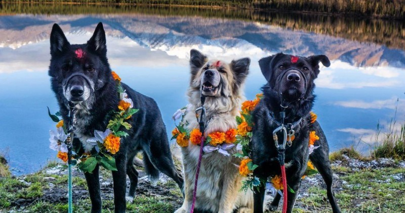 There's A Festival In Nepal Where They Spend The Day Worshipping Dogs And We're In Love