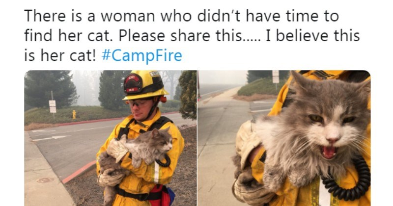 fire california uplifting animals rescue - 7126533