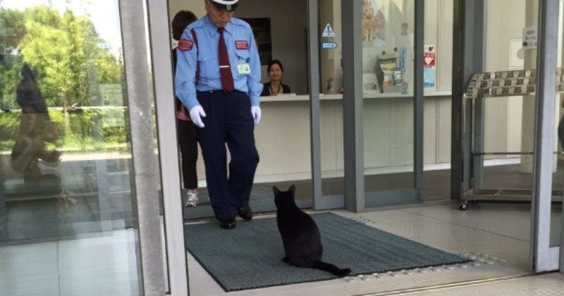 twitter sneaky funny cats Japan Cats museum - 7149573