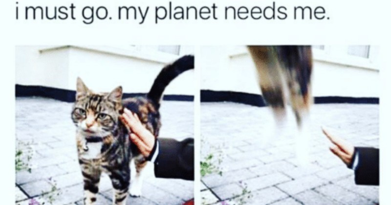12 Funny Times Animals Had To Go Because Their Planet Needed Them (Memes)