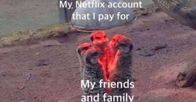 Funny Memes Animal Animals