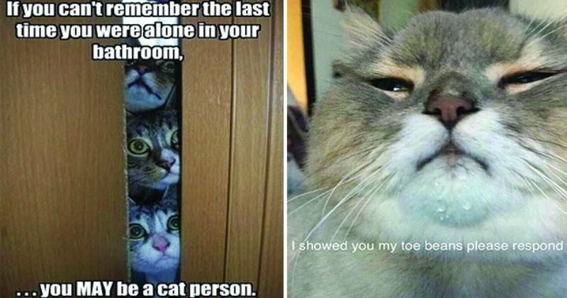funny cat memes its-caturday funny cats Caturday Cats cat memes - 7553797