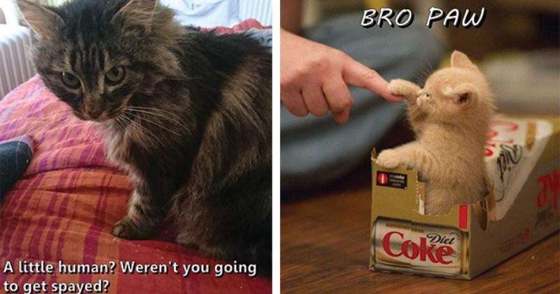 funny cat memes lolcats lol funny cats Cats cat memes - 8179205