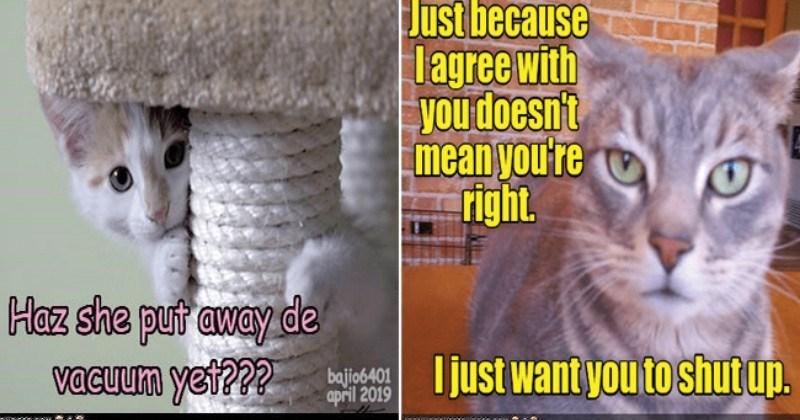 I Can Has Cheezburger Funny Animals Online Cheezburger