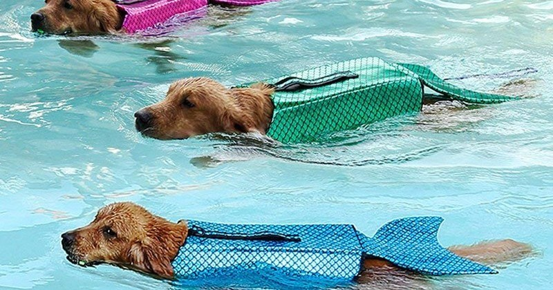 Amazon Has A Life Jacket For Dogs That Make Them Look Like Mermaids