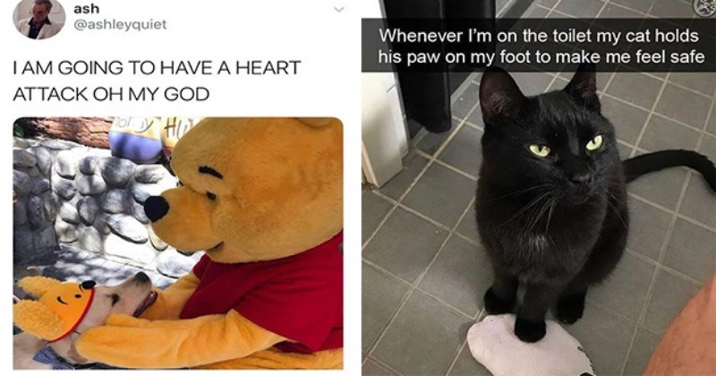 wholesome animal memes cute