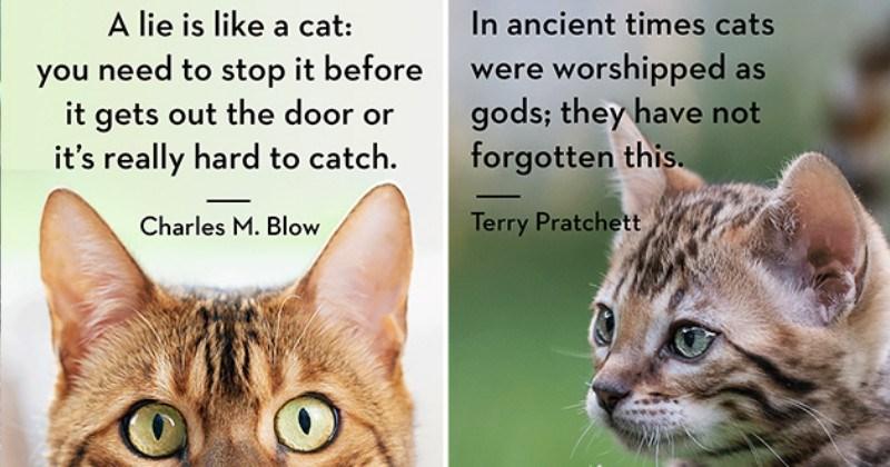 funny true cat quotes