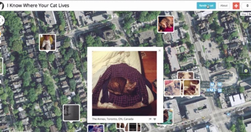 tracking internet fascinating photos experiment Cats - 88753921