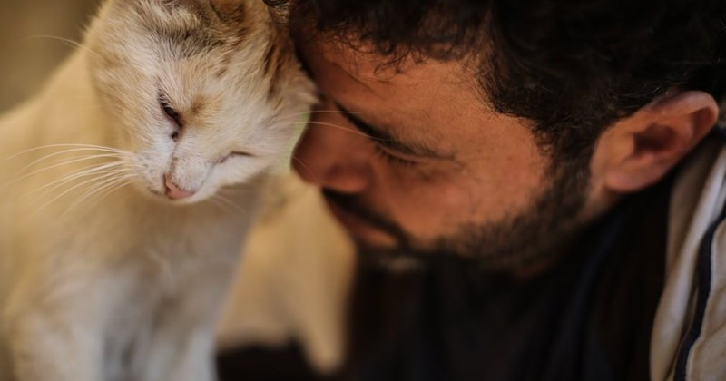 This Man Has Been Rescuing Battle-Weary Stray Cats In Aleppo, Syria