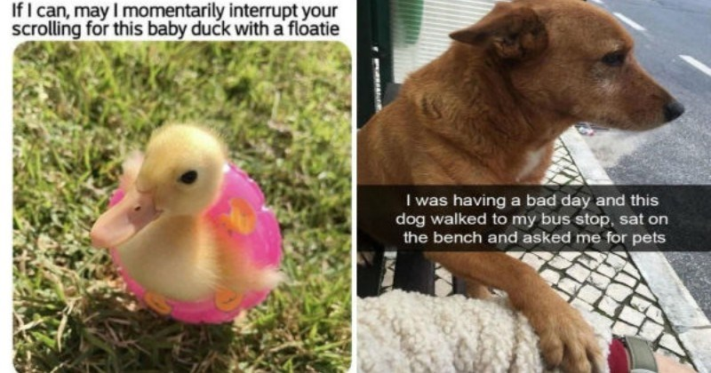 wholesome funny memes animal memes wholesome memes animals - 9262341
