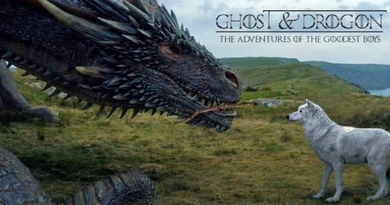 Game of Thrones meme of a make believe movie of Ghost and Drogon on an adventure together