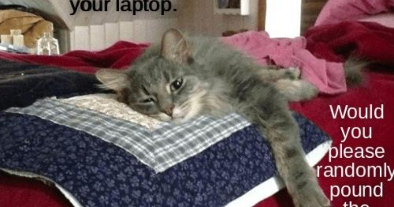 Lolcats Tired Lol At Funny Cat Memes Funny Cat Pictures With Words On Them Lol Cat Memes Funny Cats Funny Cat Pictures With Words On
