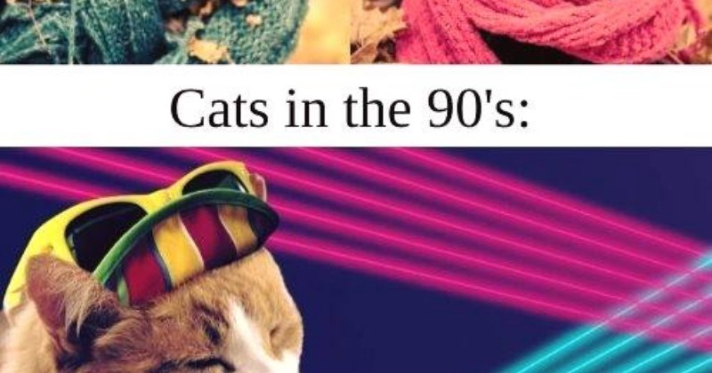 Cat fashion trends