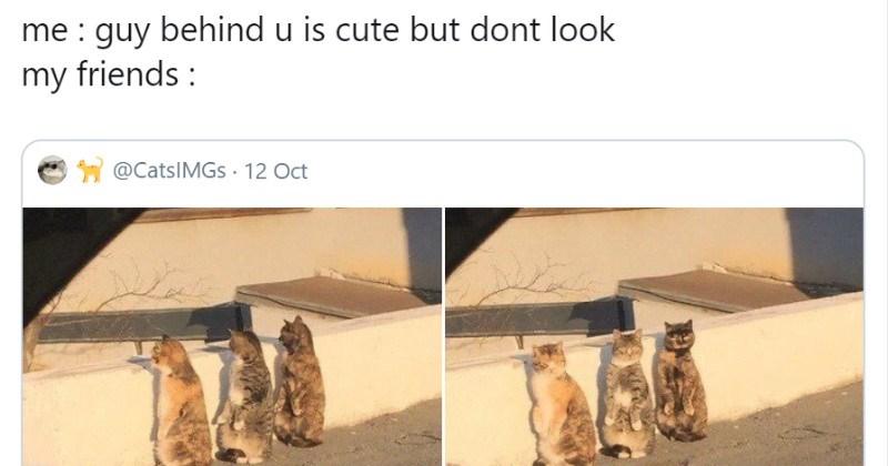 funny tweets animal tweets funny animals animals - 9501701