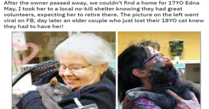 wholesome dogs kind heart faith in humanity Cats - 9526533
