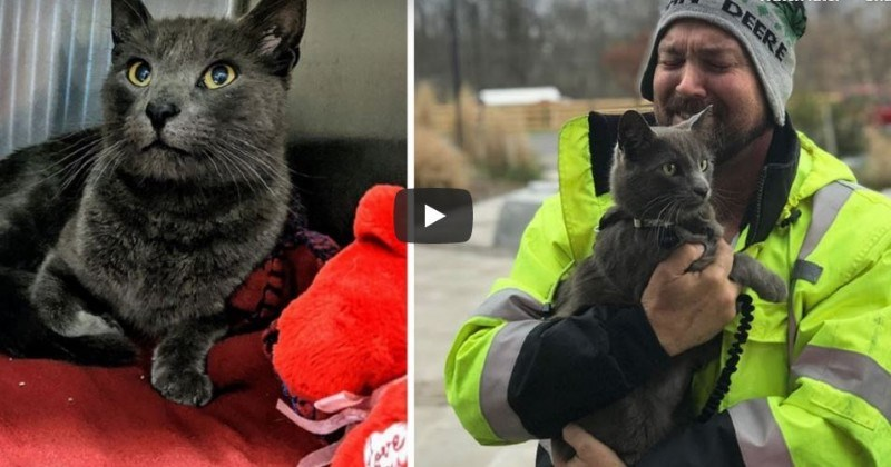 microchip youtube reunion emotional story Cats Video - 970246