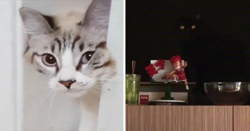 cat cats dimension funny