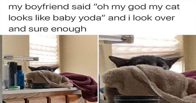 caturday funny cat memes