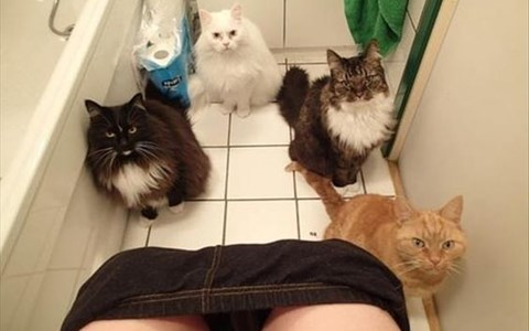 a picture of 4 cats staring at their owner as she pees - cover for a list on why its smart to adopt a pet when you're single