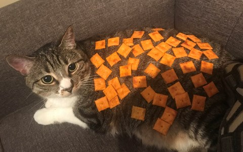 A picture of a fat cat covered with cheez its - cover for a list of cats that are covered with things while the sleep.