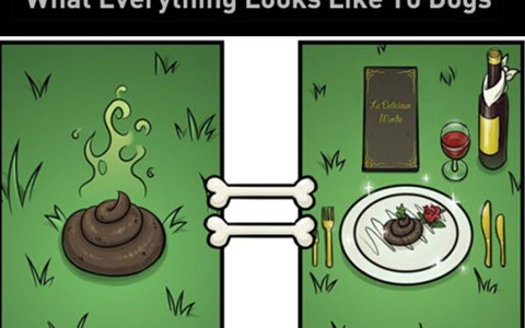 7 comic illustrations of what things looks like to dogs