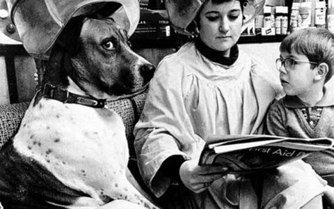 vintage photos of animals