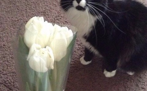a picture of a cat getting 3 roses and the cat looks stunned - cover photo for a list of just scaredy cats with funny cat photos and gifs