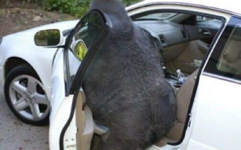 weird animals photos that are hard to explain