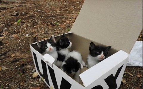 a picture of a box of black and white kittens - cover for a story about a dog that found a box of abandoned kittens in the mountains and took the role of father asap