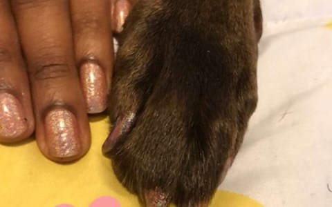 matching manicure is a trend among pet owners