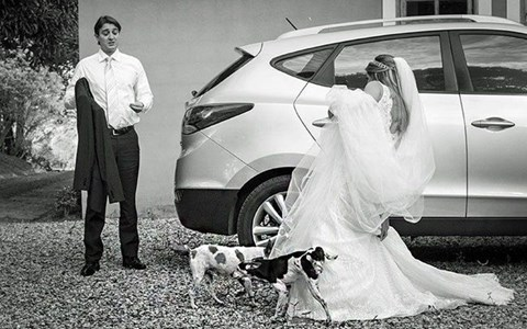 photos of animals at weddings