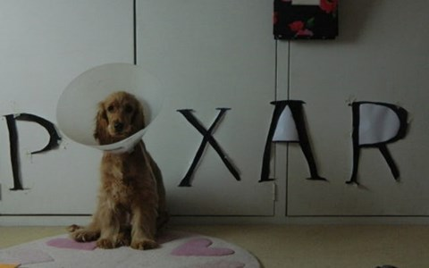 Animals using their cones of shame differently